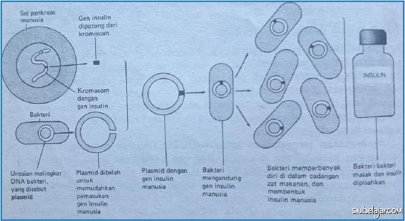 transplantasi gen manusia ke dalam bakteri
