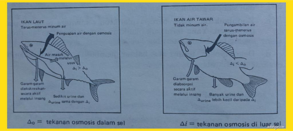 adaptasi ikan air laut dan ikan air tawar