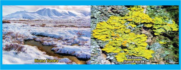 bioma tundra dan lichenes lumut kerak