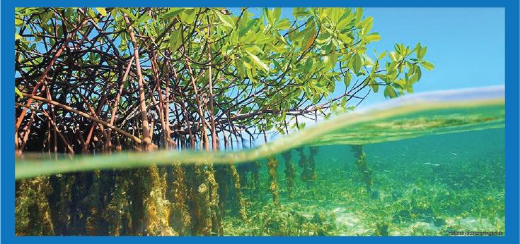 hutan bakau mangrove