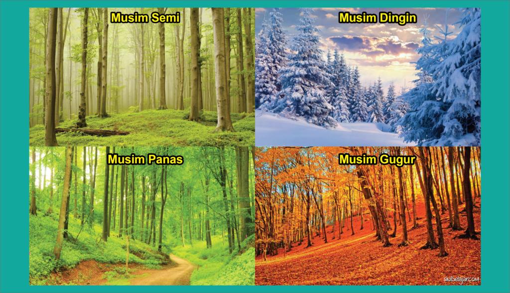 ekosistem hutan empat musim