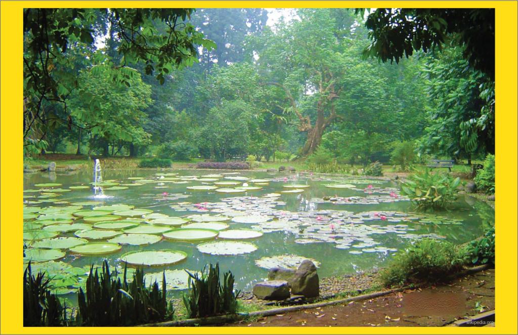 perlindungan alam kebun raya bogor