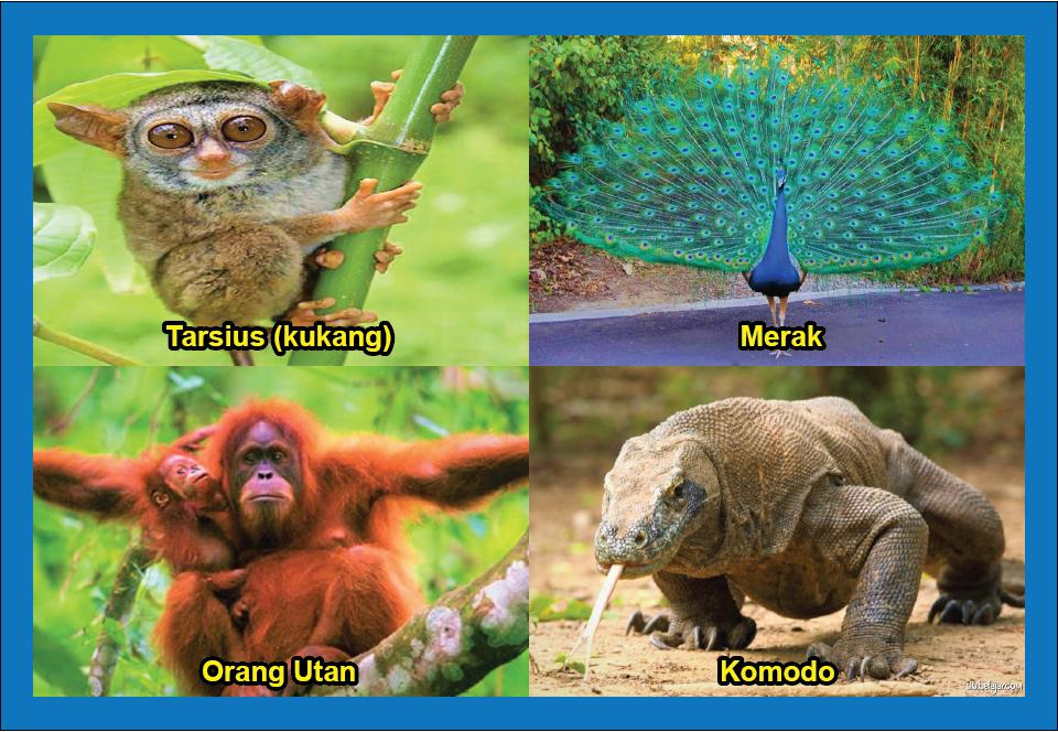 hewan langka yang dilindungi di Indonesia