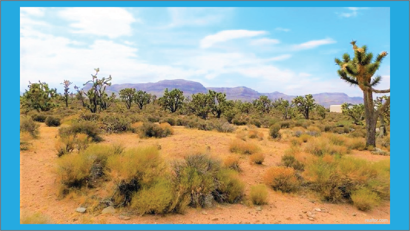 ekosistem padang gurun dengan pohon joshua