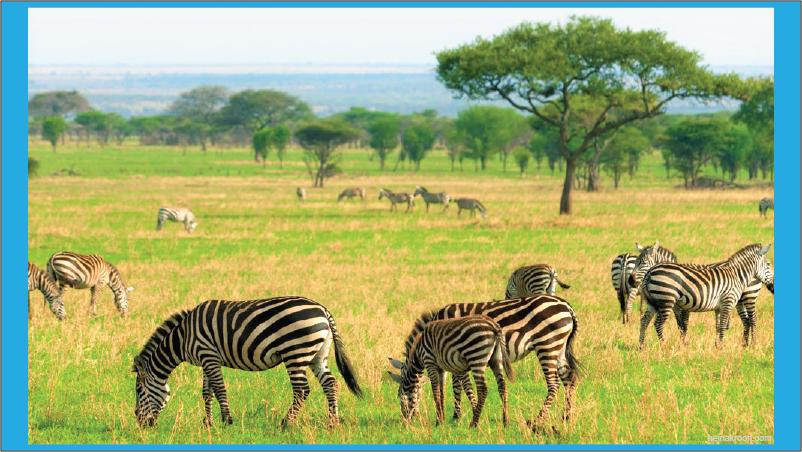 ekosistem padang rumput di savana