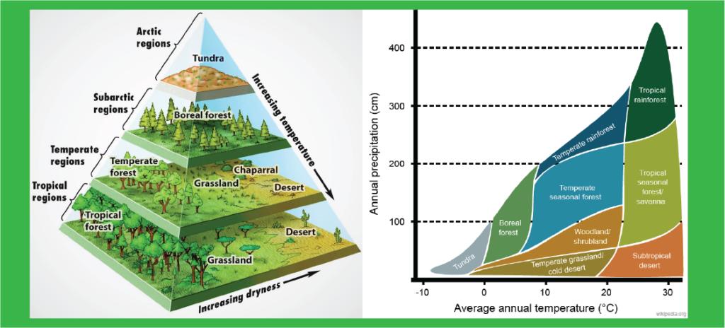 urutan zona bioma