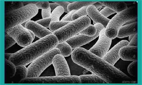 sel e coli bioteknologi