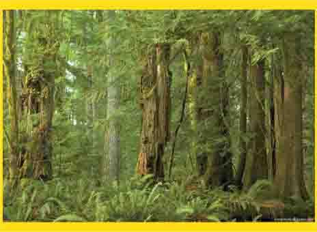 hutan sebagai sumber daya alam