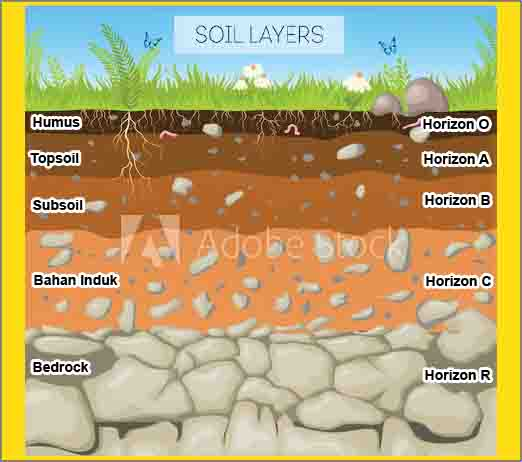lapisan tanah horizon