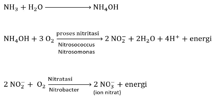 reaksi nitrifikasi