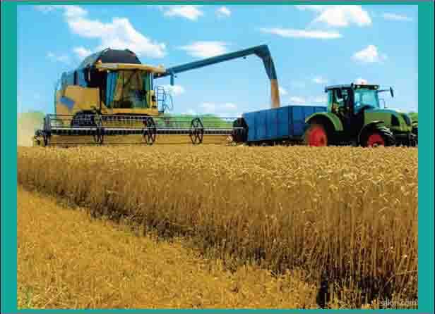 teknologi pada pertanian gandum